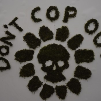 """Plants are grown in the shape of """"Don't COP out"""""""