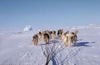 dogs-in-fan-formation-2.jpg