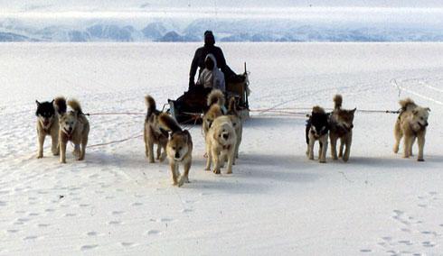 dogs_inuit.jpg