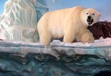 polar_bear_diorama_thumb.jpg