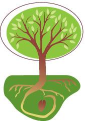 seed n tree