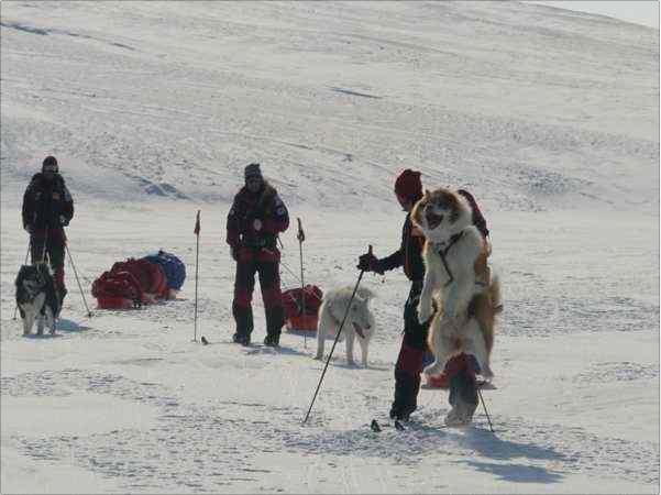 ski dogs