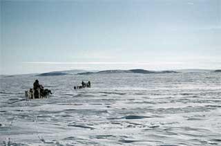 tundra_Lg.jpg
