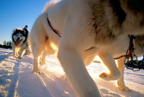 wintergreen-dogsled-lodge